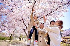 桜満開,なこさん,桜フォトコンテスト,2020,橋本屋賞