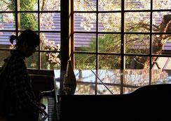 ぴあのがひきたくて・・・。,糸賀一典さん,桜フォトコンテスト,2020,浅草粋や賞