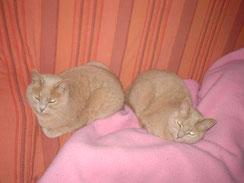 Sissi & Jacky