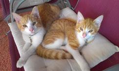 Stanley & Ollie