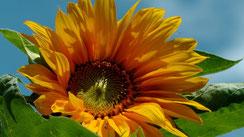 Endlich Sommer Blick in meinen Garten 2014