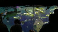 Das Sea Life in München