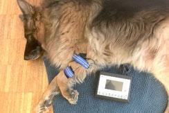 Anima-Balance | TCM für Tiere | Alternativmedizin | AmpliVet | Schmerztherapie