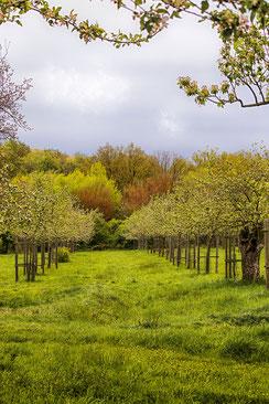 Streuobstwiese im Fruehling © Jutta M. Jenning