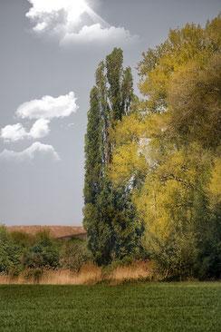 Bäume in der Landschaft © Jutta M. Jenning