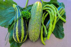 Karin Hohensee – meine grüne Ernte