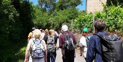 Eine Wanderung durch die Ahrweiler Weinberge beinhaltet diese Weinprobe an der Ahr.