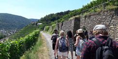 Hoch über Ahrweiler geht es mit einem Glas Wein in der Hand durch die Weinberge.