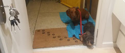 Happy-go-lucky dog - Puppy training program