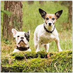 Vom 1. bis 30. September kostenloser Aufenthalt für Ihren Hund