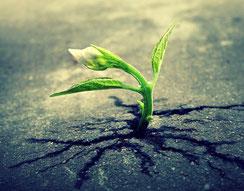 êtres en devenir croissance