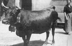 Violette reine cantonale du Valais 1923 1924 1925