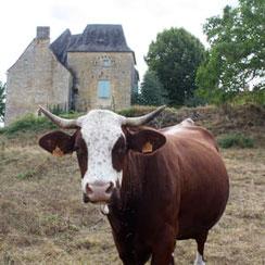 La race Abondance implantée en Dordogne