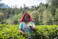 Teepflückerin Sri Lanka