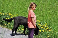 un chien labrador noir se proméne tenu en laisse par une petite fille sur le bord d'une route par coach canin 16 educateur canin en charente à domicile