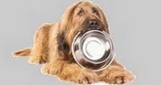 Un chien marron clair tient une gamelle dans sa gueule par coach canin 16 educateur canin en charente