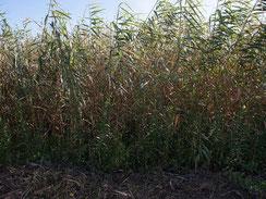 画像:高茎草原の様子