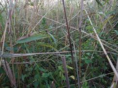 画像:高茎草原の下草の様子