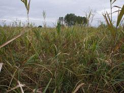 画像:低茎草原の様子