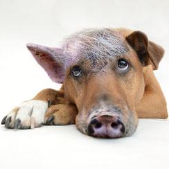 """""""Schweinehund"""""""