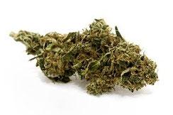 legale CBD Blüten Hanf Cannabis Deutschland