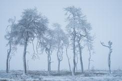 Belgien: Winterlandschaften