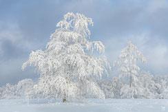 Germany: Winterdreams