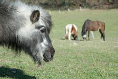 Paten für betagte Pferde und Ponys gesucht