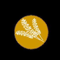 Fleur de Kamahi de Nouvelle-Zélande