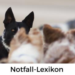 Notfall-Lexikon Französisch für Hundeurlauber