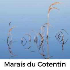 Urlaub mit Hund auf dem Cotentin: Die Marais erkunden