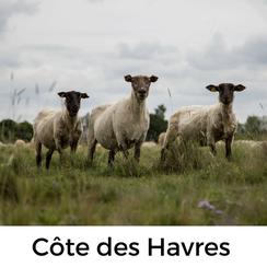 Tour mit Hund in der Normandie: Die Côte des Havres erkunden