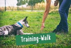 Training-Walk für Hund und Herrchen