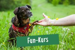 Hund sitzt auf einer Wiese im Hamburger Stadtpark und gibt Pfötchen