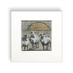 3 Schafe