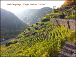Weinproben an der im Ahrtal sind auch in den Weinbergen rund um Walporzheim möglich.