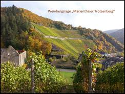 Die Ahr-Vinothek bietet Ihnen verschiedene Weinprobenangebote bereit. Besonders beliebt sind die Weinproben an der mir, die mit einer Wanderung verbunden sind. Wandern Sie zum Beispiel von Ahrweiler bis nach Mayschoß oder von Dernau bis nach Altenahr.