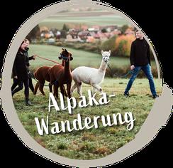 zu Alpaka-Wanderung