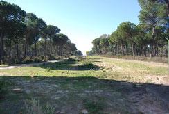 Gasoducto en Doñana