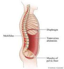 Segmentale Stabilisation nach Hamilton, Physiotherapie Basel, Physiotherapeuten Basel, Massage Basel, Massage Praxis Basel