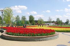 Tulpenblüte im Landesgartenschau-Gelände am EmsRadweg © pro Wirtschaft GT