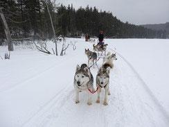 Huskies ziehen einen Schlitten durch den verschneiten Wald.