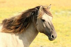 succès ou échec d'un traitement de Reiki sur un animal