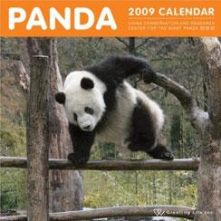 私の大好きなパンダ写真の一つです♪