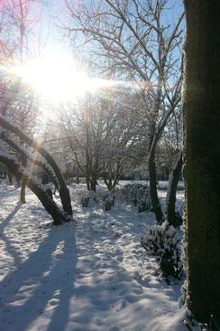 Winter im Günthersburgpark