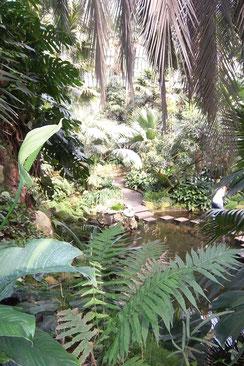Palmenhaus im Palmengarten