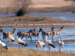 Naturpark Aiguamolls de l'Empordà