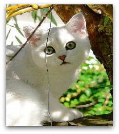 BKH, silver-shaded, Foto: privat, vom-lohmberg.de