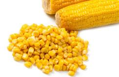 Il mais è un super-antiossidante se non OGM