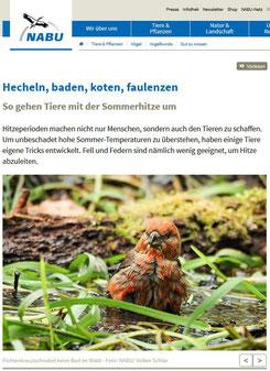 Fichtenkreuzschnabel auf NABU.de